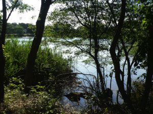 Otter Pond West