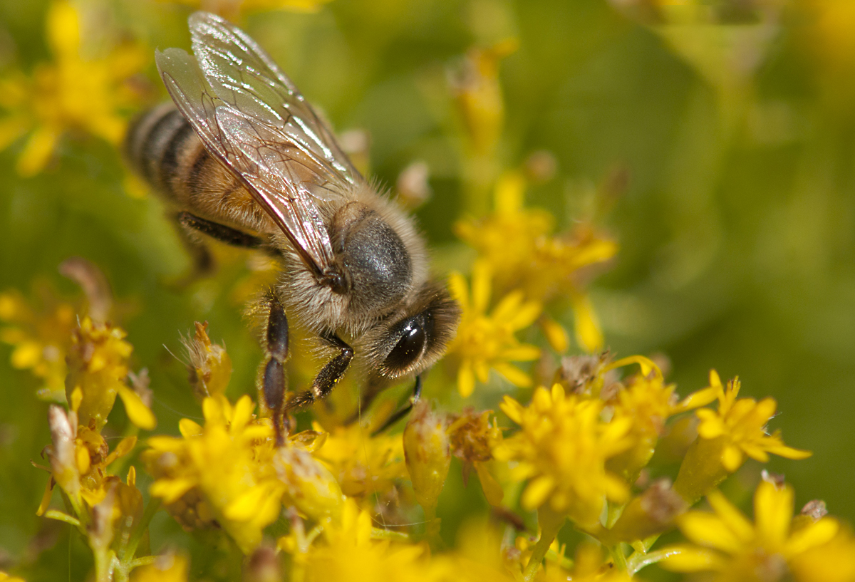 Beefly SoFo
