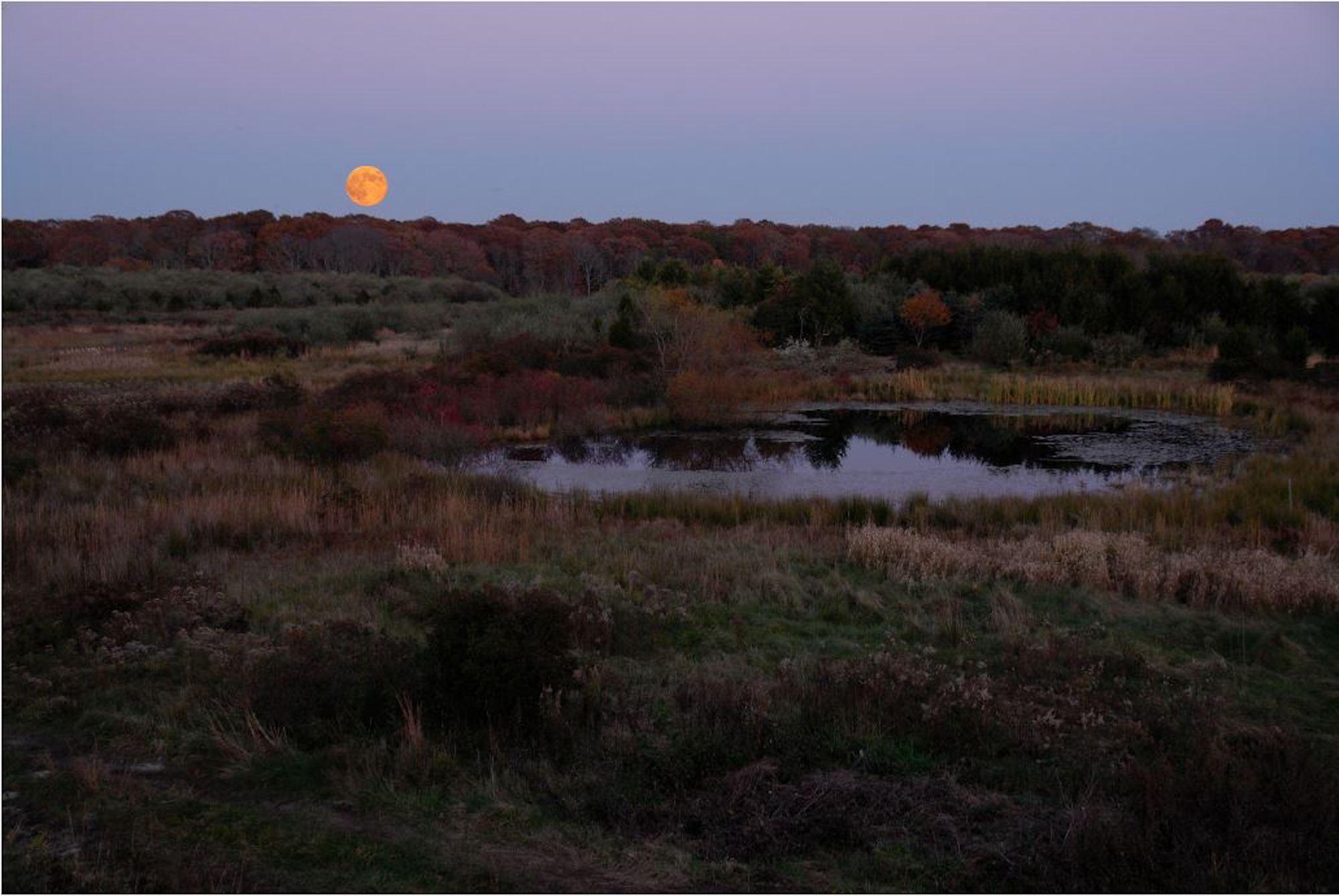 Moonrise Over Vineyard Field 11-5-06