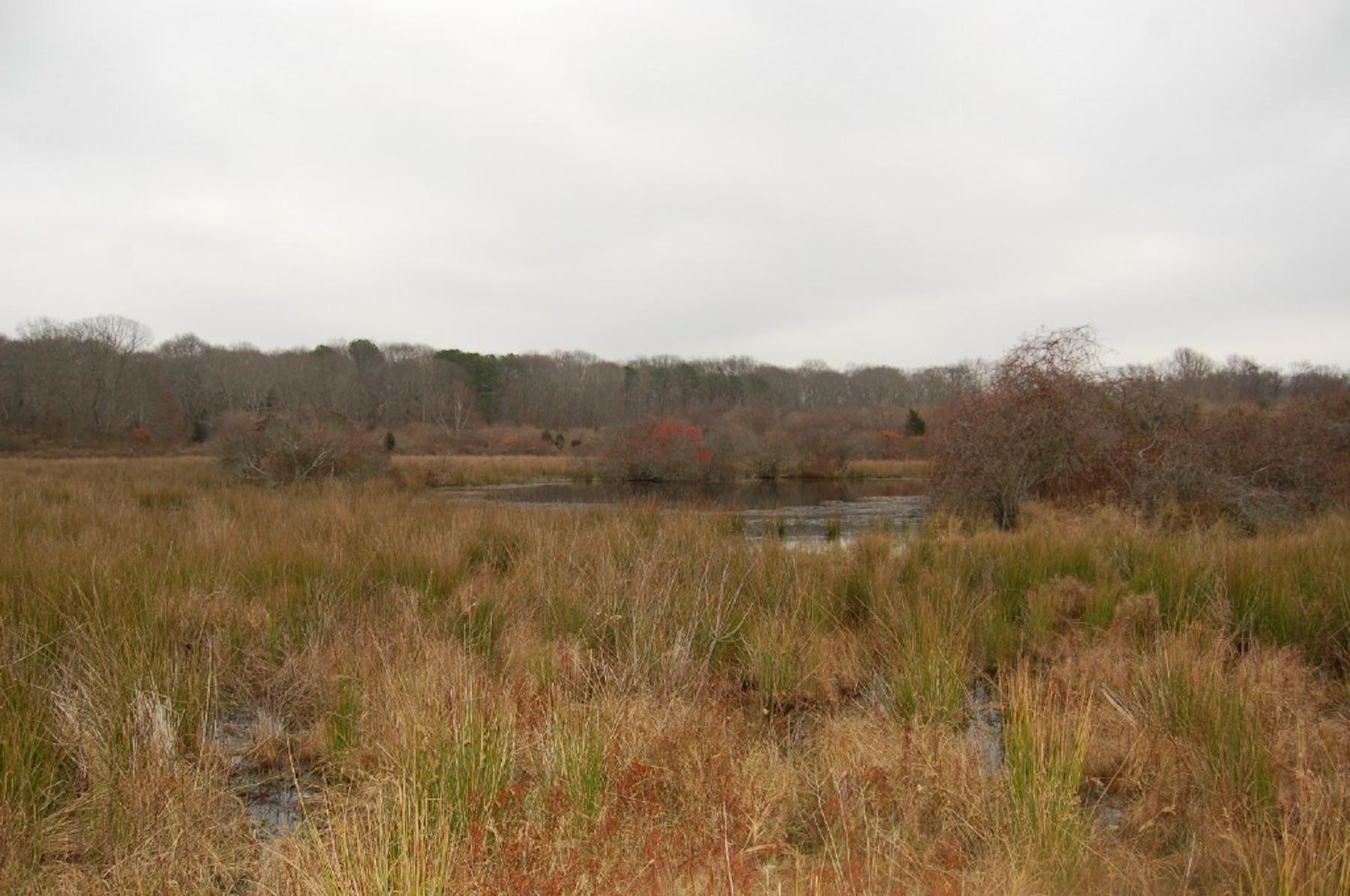 Nov2006Vineyard Field 2