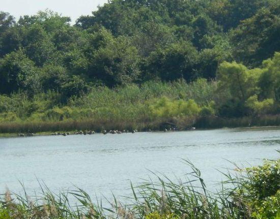 Poxabogue Pond