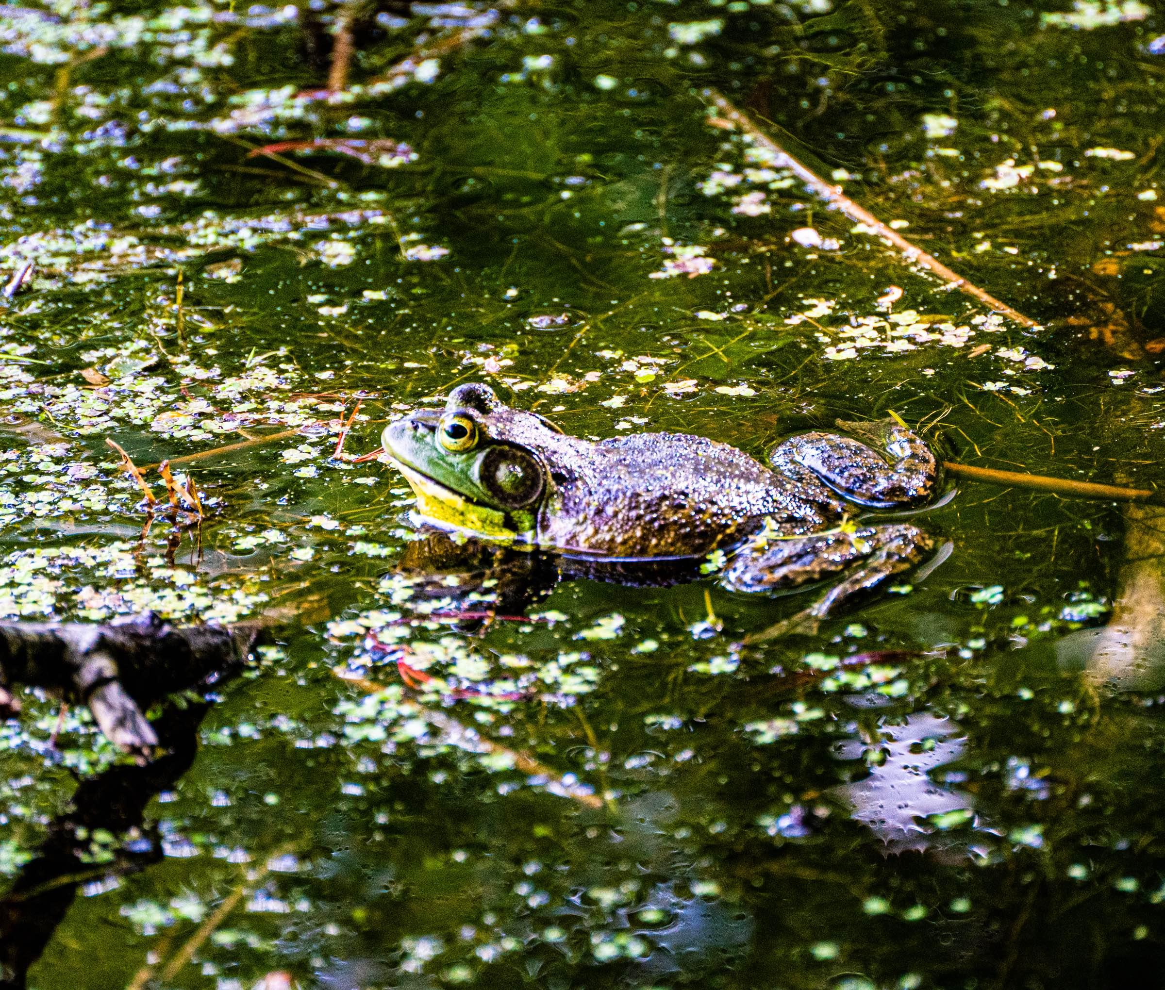 croak pond